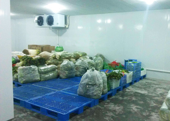 China Onion / Tomato Cold Storage Room Customized Size With Condensing Unit supplier